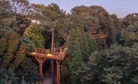 Treetop Walkway.