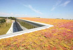 Building a Safer Green Roof
