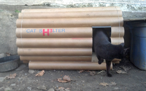 The shelter designed by H3 Hardy was given to CSM Foundation. Here, a stray cat uses the outdoor shelter.