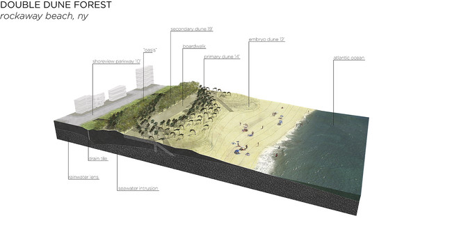 Local Office Landscape Architecture proposed a coastal dune forest pilot project for Rockaway Beach. It would dissipate wave energy, stabilize the dunes, and protect the beach from damage.