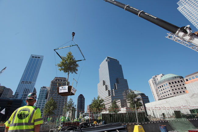 Work on the plaza is moving along. In August, workers planted 16 trees, each about 30 feet tall.