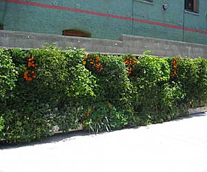 walls covered in food plants