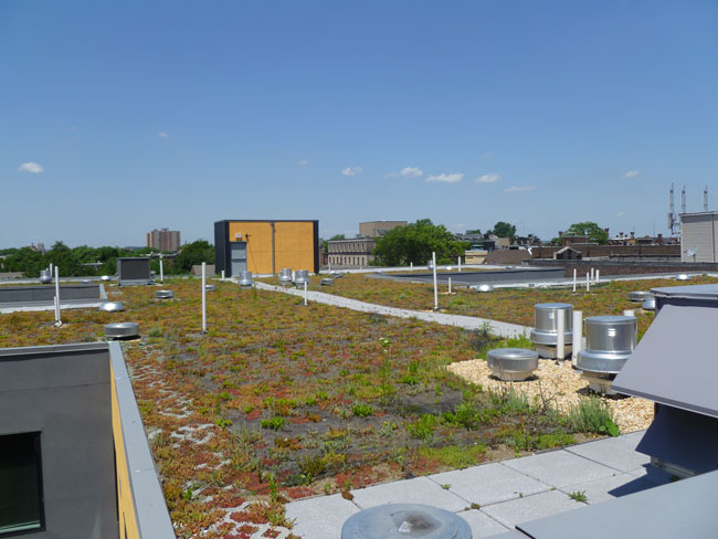 The project's green roof.