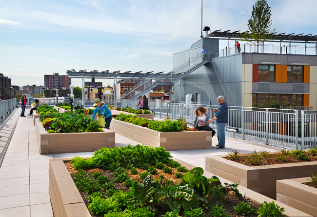 Residents will be able to grow their own vegetables in rooftop planter boxes.