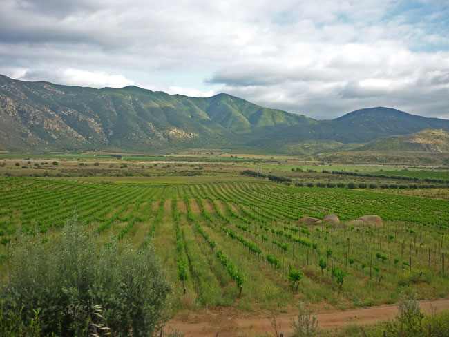 Baja's verdant wine country contains about 60 wineries.
