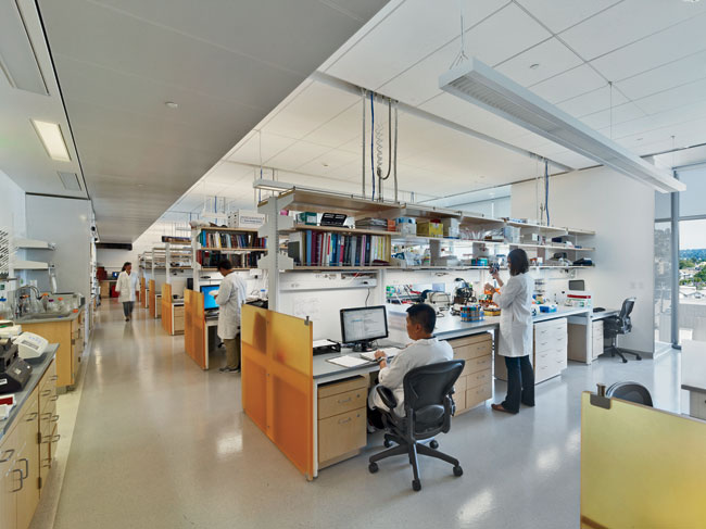 The electric lighting for the laboratories includes pendant luminaires placed between the lab benches for ambient light. Each work surface has its own LED task light equipped with an occupancy sensor