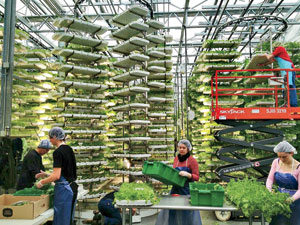 View a slideshow for Urban Agriculture Grows Up